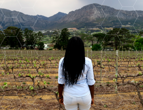 WINE TOURISM: LET'S TOUR FRANSCHOEK, SOUTH AFRICA